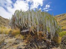 Cactus. Close up of cactus texture background stock photos