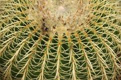 Cactus closeup Stock Photo