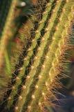 Cactus closeup  Stock Photos