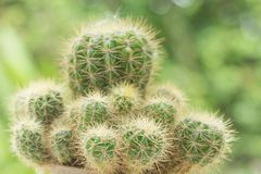 Cactus Closeup shot stock photography