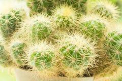 Cactus Closeup shot stock image