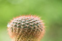 Cactus Closeup shot royalty free stock images