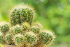 Cactus Closeup shot stock photos