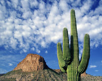 Cactus and clouds royalty free stock photo