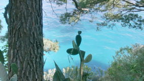 A Cactus at the Coast in Positano Italy. Medium long high dynamic range panning tracking slider shot of a Prickly Pear cactus shaded by a tree and surrounded by stock footage