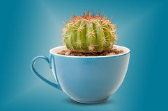 Cactus in coffee cup Royalty Free Stock Images