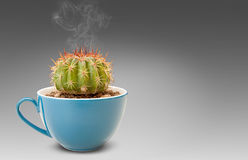 Cactus in coffee cup Royalty Free Stock Photos
