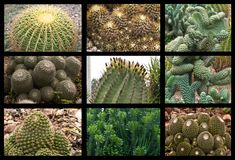 Cactus Collage Royalty Free Stock Photos