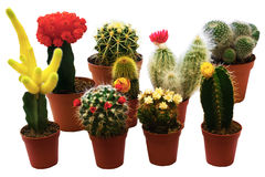 Cactus collection 2 Royalty Free Stock Photography