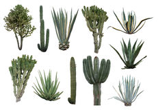 Cactus Collection Royalty Free Stock Photography