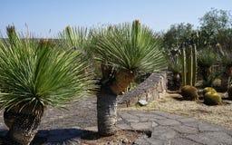 Free Cactus Collection At El Charco Del Ingenio Garden, Mexico Stock Photography - 179656802
