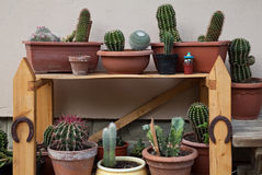 Cactus collection Stock Images