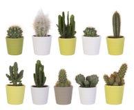 Cactus collection Stock Photos