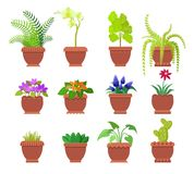 Cactus Collection of Plants Vector Illustration. Cactus and collection of plants set, room herbs different types planted in brown pots, leaves and blossom vector Royalty Free Stock Images