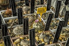 Cactus collection. It presents various copies of cacti. growing areas are equipped with plates on which their names are listed Stock Photos