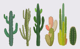 Cactus collection. Sets of cactus tree in vector illustration Vector Illustration