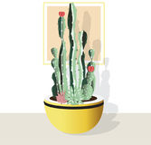 Cactus collection  on white background. Royalty Free Stock Photo