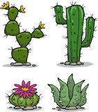 Cactus collection. On a white background illustration Royalty Free Stock Images