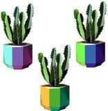 Cactus colorés de bel bel de Mexicain été floral de fines herbes tropical mignon lumineux d'Hawaï Image stock