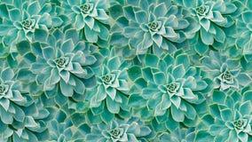 Cactus color de rosa de la roca verde Foto de archivo libre de regalías