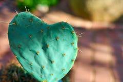 Cactus colorido del corazón fotos de archivo libres de regalías