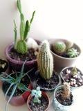 Cactus colorido y tiempo de verano suculento foto de archivo