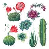 Cactus coloridos exhaustos de la mano y sistema suculento Houseplant, cactus, plantas tropicales ilustración del vector