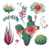Cactus coloridos exhaustos de la mano y sistema suculento Houseplant, cactus, plantas tropicales libre illustration