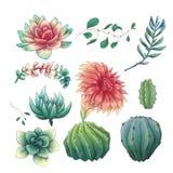 Cactus coloridos exhaustos de la mano y sistema suculento Houseplant, cactus, plantas tropicales stock de ilustración