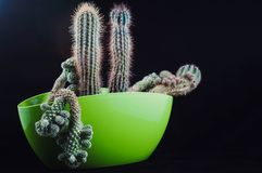 Cactus come tendenza all'interno dell'ufficio ed a casa immagine stock libera da diritti