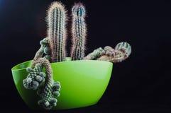 Cactus comme tendance à l'intérieur du bureau et à la maison image libre de droits