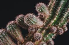 Cactus como tendencia dentro de la oficina y en casa imagen de archivo libre de regalías