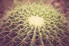 Cactus con annata di effetto del filtro la retro Fotografia Stock