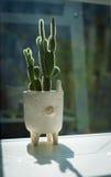 Cactus con el pote blanco Fotografía de archivo libre de regalías