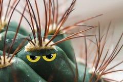Cactus con gli occhi di giallo ed il collage ostile di sguardo fotografia stock libera da diritti
