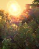 Cactus con il Sun e Sunflare Fotografia Stock Libera da Diritti