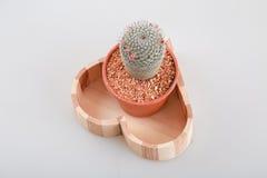 Cactus con il vaso Immagini Stock