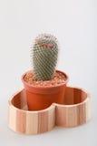 Cactus con il vaso Fotografia Stock