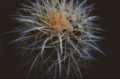 Cactus con las espinas Fotos de archivo libres de regalías