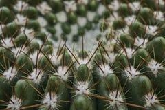 Cactus con las espinas dorsales Fotografía de archivo libre de regalías