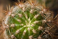 Cactus con las espinas Up1 cercano fotografía de archivo