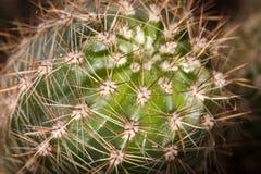 Cactus con las espinas Up2 cercano foto de archivo