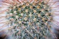 Cactus con le gocce di acqua Immagini Stock Libere da Diritti