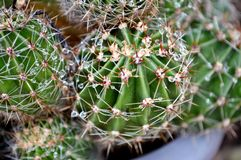 Cactus con le goccioline della pioggia in un vaso immagini stock libere da diritti