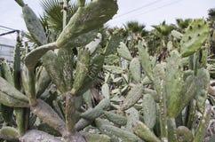 Cactus con los diversos caracteres prohibidos imágenes de archivo libres de regalías