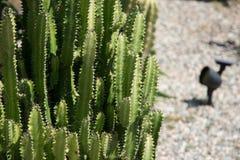 Cactus con los web de araña Fotografía de archivo