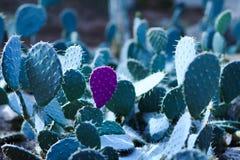 Cactus con un pétalo aislado en el color violeta en el fondo o fotografía de archivo