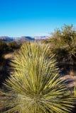 Cactus con una vista Immagine Stock Libera da Diritti