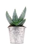 Cactus conservato in vaso Fotografia Stock Libera da Diritti