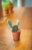 Cactus conservato in vaso Immagine Stock